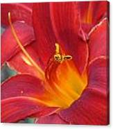 Single Red Lily 2 Canvas Print