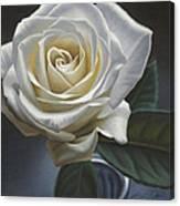Single White Rose Canvas Print