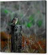 Sitting On The Fence Canvas Print