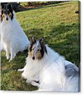 Sitting Pretty Collie Dogs Canvas Print