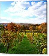 Six Miles Creek Vineyard Canvas Print