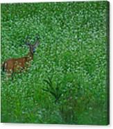 Six Point Deer In Wildflowers Canvas Print