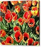 Skagit Valley Tulips 10 Canvas Print