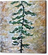 Skinny White Pine Canvas Print