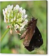 Skipper On Clover Square Canvas Print