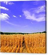 Sky Over The Field 3 Ae  Canvas Print
