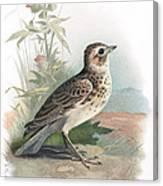 Skylark, Historical Artwork Canvas Print