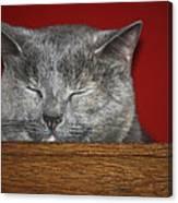 Sleeping Pixie Canvas Print