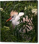Sleepy Egret In Elderberry Canvas Print