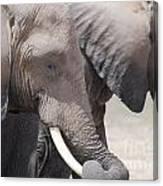 Sleepy Elephants Canvas Print
