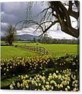 Slievenamon, Ardsallagh, Co Tipperary Canvas Print