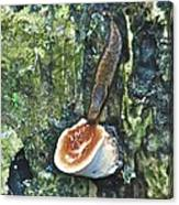 Slug 7044 1674 2 Canvas Print