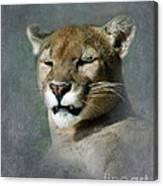 Slumbering Mountain Lion Canvas Print