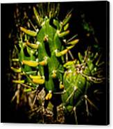 Small Green Cactus Canvas Print