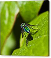 Small Green Fly Canvas Print