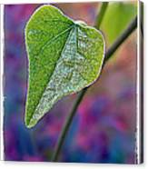 Smilax Canvas Print