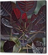 Smoke Tree Canvas Print