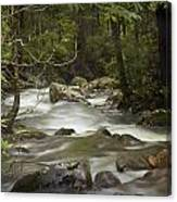 Smokey Mountain Stream No.326 Canvas Print