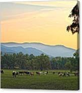 Smoky Mountain Horse Herd Canvas Print