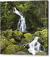Smoky Mountain Waterfall - Mouse Creek Falls Canvas Print