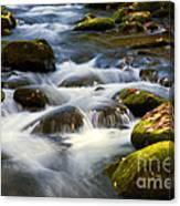 Smoky Mtn Stream Canvas Print