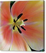 Smooth And Silky Canvas Print