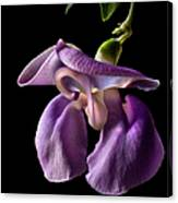 Snail Flower Canvas Print