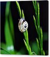 Snail On Green Grass Canvas Print