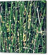 Snake Grass On The Beach Canvas Print