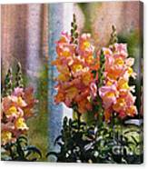 Snapdragons Canvas Print