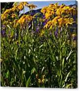 Sneezeweed And Lupine Wildflowers At Lake Irwin Canvas Print