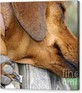Sniffing Out Dreams Canvas Print