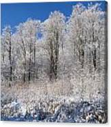 Snow Covered Maple Trees Iron Hill Canvas Print