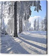 Snow Covered Path, Rennsteig, Grosser Inselsberg, Brotterode, Thuringia, Germany Canvas Print
