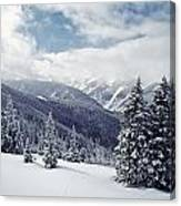 Snow Covered Pine Trees On Mountain Canvas Print