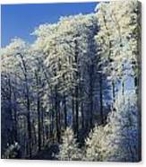 Snow Covered Trees In A Forest, County Canvas Print
