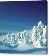Snow Covered Trees, Yellowstone National Park, Wyoming, Usa Canvas Print