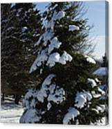 Snow Crusted Evergreen Canvas Print