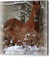 Snow Dreams Canvas Print