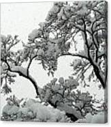 Snow Falling On Branches Canvas Print