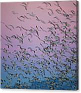 Snow Geese Painting Canvas Print