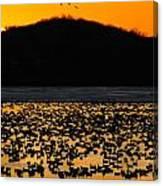 Snow Geese Sunrise Canvas Print