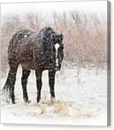 Snow Horse Canvas Print