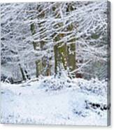 Snow Magic Canvas Print