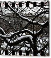 Snow On Branches Canvas Print