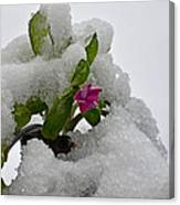 Snow On The Flowers Canvas Print