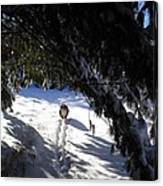 Snow Trail-under The Boughs Canvas Print