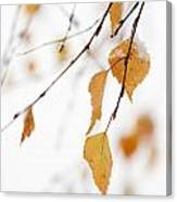 Snowing In Autumn Canvas Print