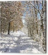Snowpath Canvas Print