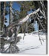 Snowshoeing On A Clear Day Canvas Print